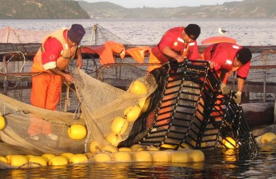 red salmon trabajadores